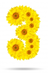 """Number 3 Made Of Sunflower"" by kangshutters via freedigitalphotos.net"